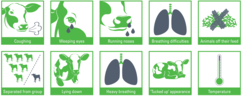 Infographics of the signs of pneumonia