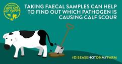 Picture explaining that taking faecal samples can help to identify the cause of scour
