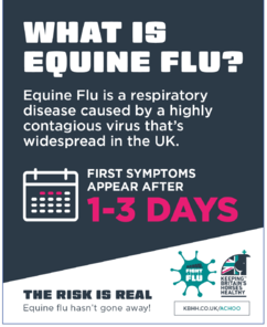 Infographic explaining what equine flu is