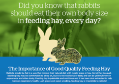 Image of an illustration showing the importance of hay feeding rabbits