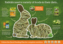 Image of an illustration showing the variety of foods rabbits need in their diet