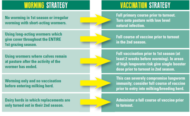 image of cattle worming vs vaccination table