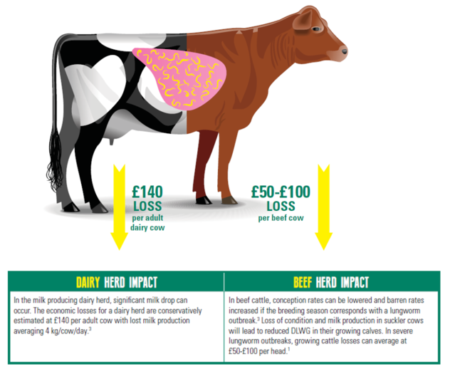 Image showing the impact of lungworm on dairy and beef cattle
