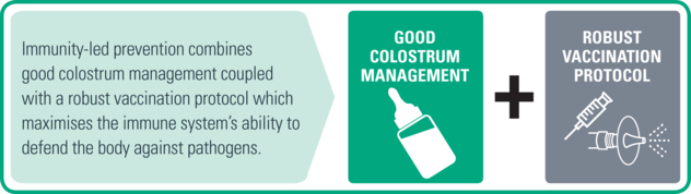 mportance good colostrum management and robust vaccination protocols