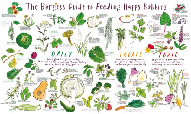 Image of an illustration showing the right food for rabbits