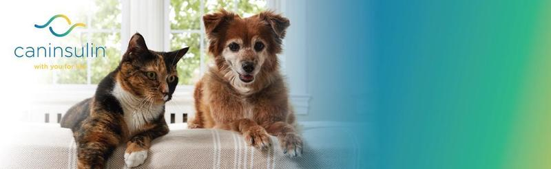 Caninsulin dog imagery