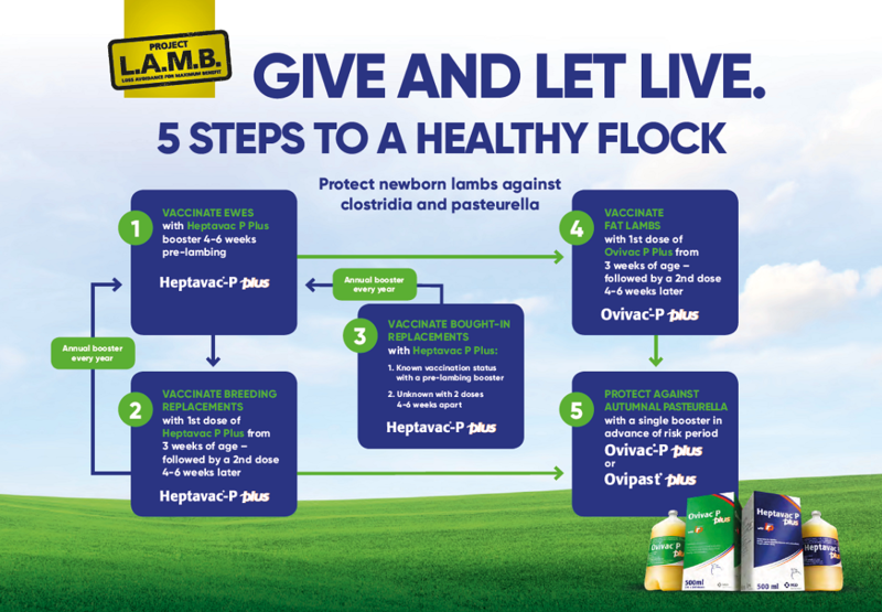 Image of the 5 steps to a healthy flock flow chart