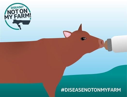 Disease? Not On My Farm! brown calf illustration