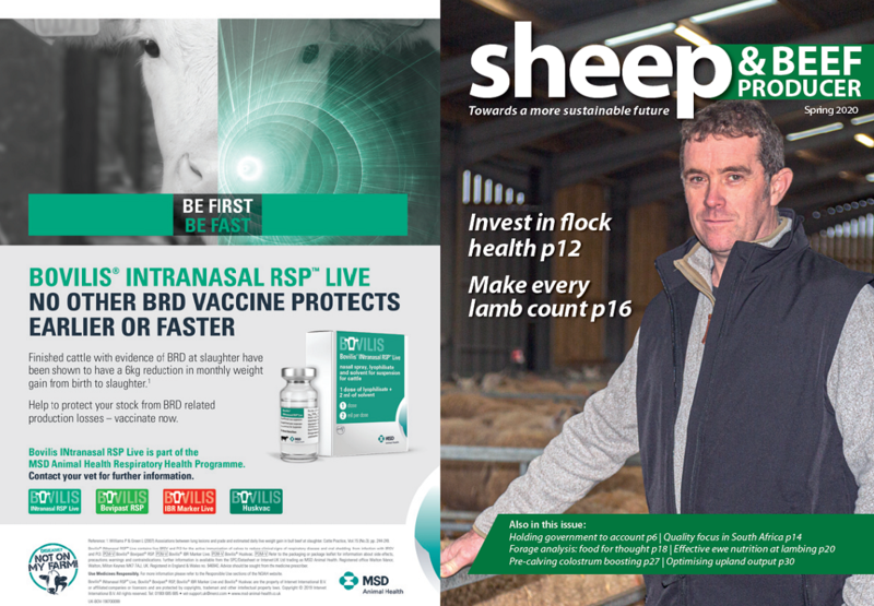 Image of the Sheep and Beef producer newsletter spring 2020