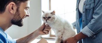 Cat Diabetes