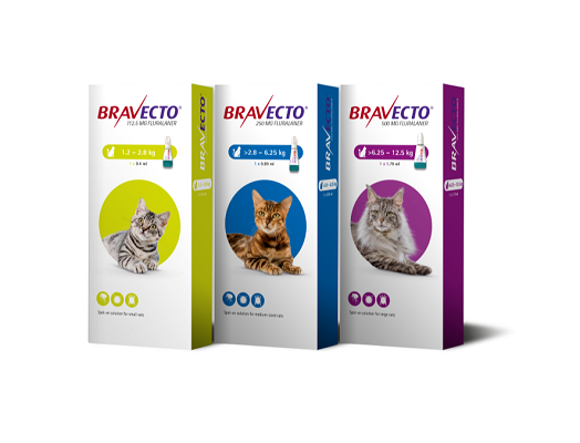 Bravecto cat spot on product range