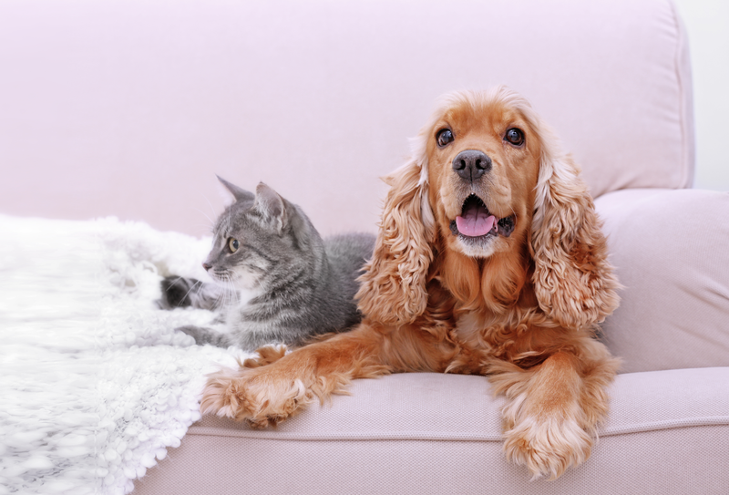 Caninsulin diabetes dog cat frequently asked questions
