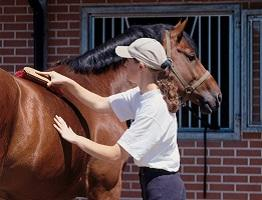 Image of horse being groomed