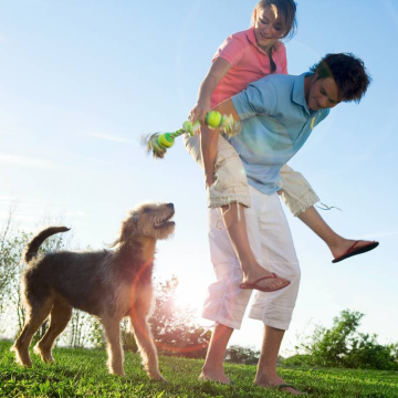 Keep your dog healthy mobile banner