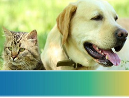 Image of a tabby cat and Labrador dog