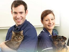 Image of a vet nurse holding a dog and vet nurse holding a cat