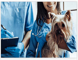 Image of a vet nurse holding a dog next to a vet completing a form