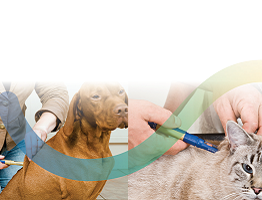 Image of a cat and a dog being injected with Caninsulin VetPen