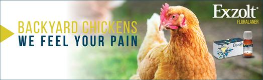 Image of Exzolt backyard chickens campaign banner