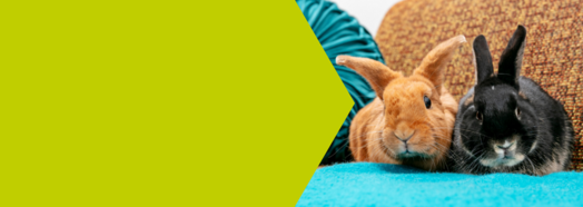 Reducing the disease risk for rabbits