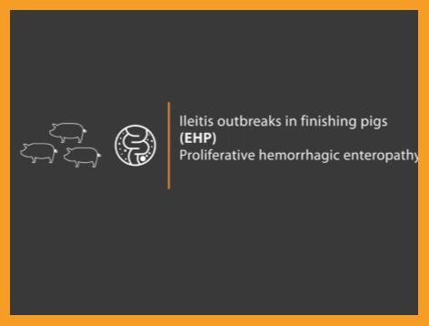 "Image of text ""Ileitis outbreaks in finishing pigs (EHP) proliferative hemorrhagic enteropathy"