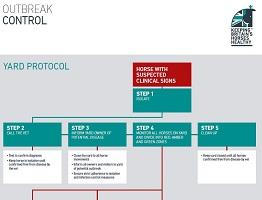 Keeping Britain's Horses Healthy yard protocol flow chart