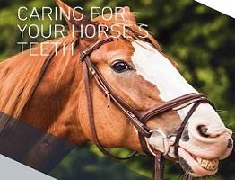 Page from downloadable booklet 'Caring for your horse's teeth.'