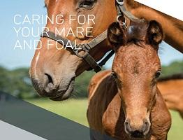 Image of Keeping Britain's Horses Healthy booklet: Caring for your mare and foal