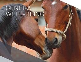 Image of Keeping Britain's Horses Healthy booklet:  General well-being