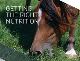 Image of Keeping Britain's Horses Healthy booklet: Getting the right nutrition