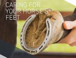 Page from downloadable booklet 'Caring for your horse's feet'.