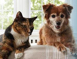 Image of a senior cat and dog on the sofa