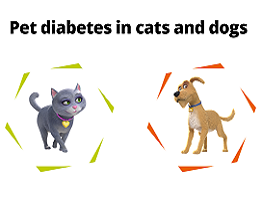 Image of Sugar the cat in a hexagon and Spike the dog in a hexagon