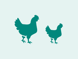 MSD Animal health chicken avatars