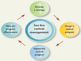 Image of sea lice control infographic