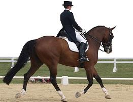Image showing a horse competing