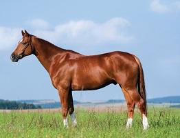 Image of brown horse in field