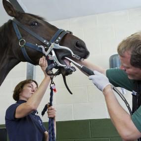 Image of horse dental examination