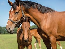 Image of foal and broodmare