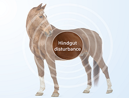 Image of horse with icon showing hindgut disturbance