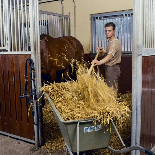 Image of stable being mucked out