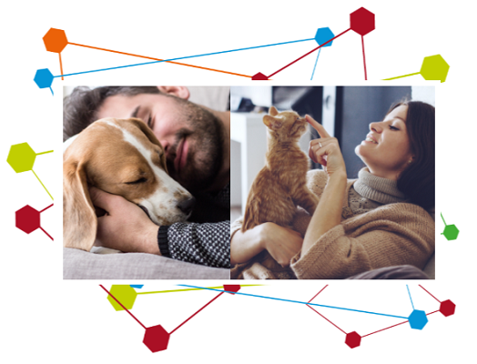Image of a man sleeping next to is Beagle and a women with her ginger kitten