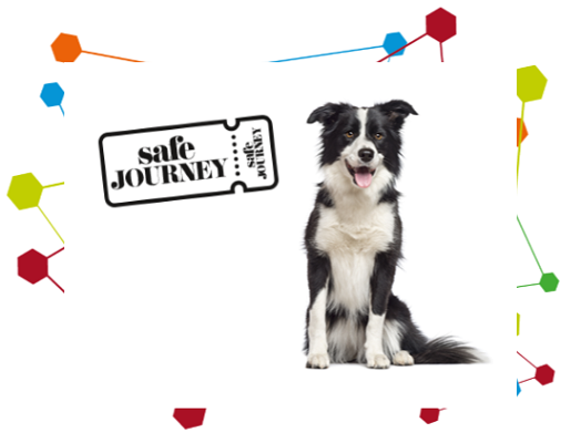 Image of a border collie next to a Safe Journey logo