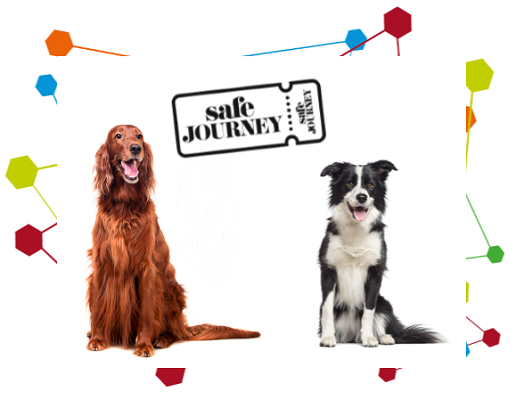 Image of a red setter and a border collie next to safe journey logo
