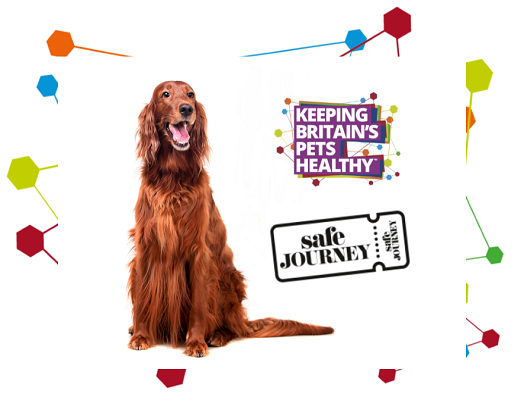 Image of a Red Setter, Keeping Britain's Pets Healthy and Safe Journey logo
