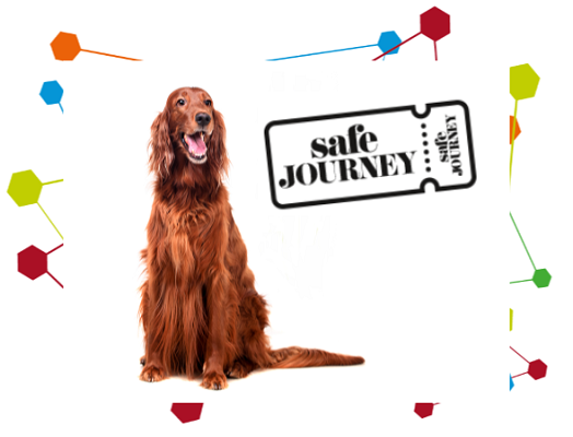 Image of a red setter next to a safe journey logo