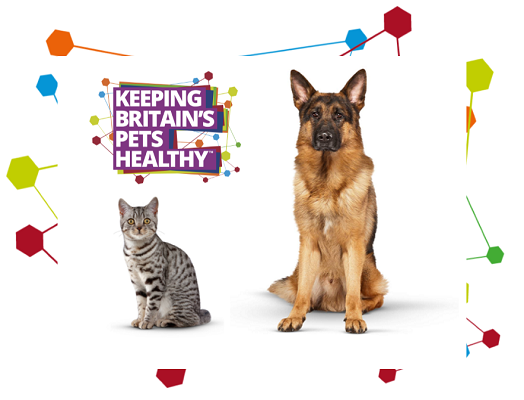 Image of an Alsatian and an american shorthair cat