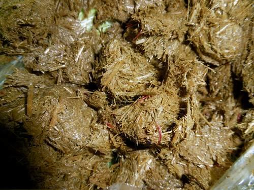 Image of horse faeces with worms showing