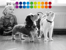 Image of Nobivac campaign dog and cat with Nobivac dots