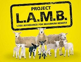 Image of project lamb logo and sheep